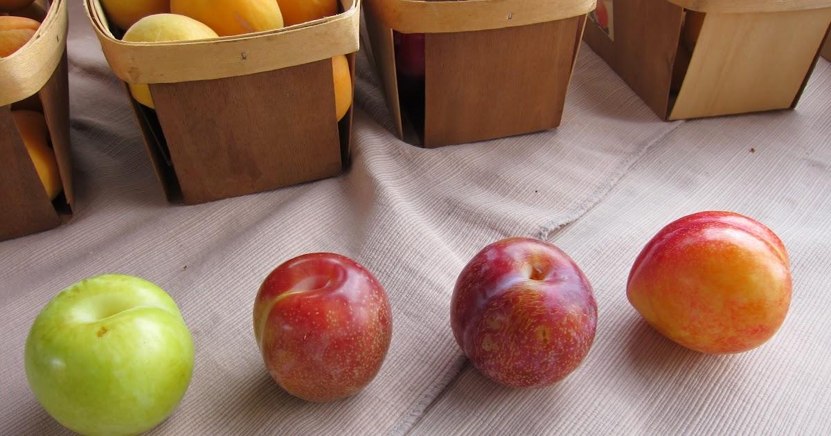 Peaches Food Truck Yelp