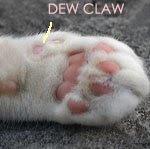 Fungsi Cakar Kucing dan juga Bentuknya