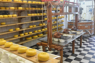 Cheeses in various stages, Catharina Hoeve Cheese Farm, Zaanse Schans, Zaandam, The Netherlands