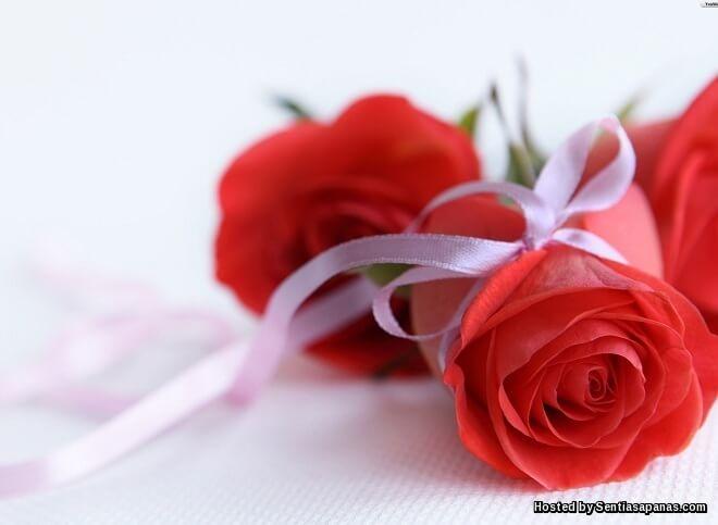 Maksud Warna Bunga Ros Dalam Perhubungan