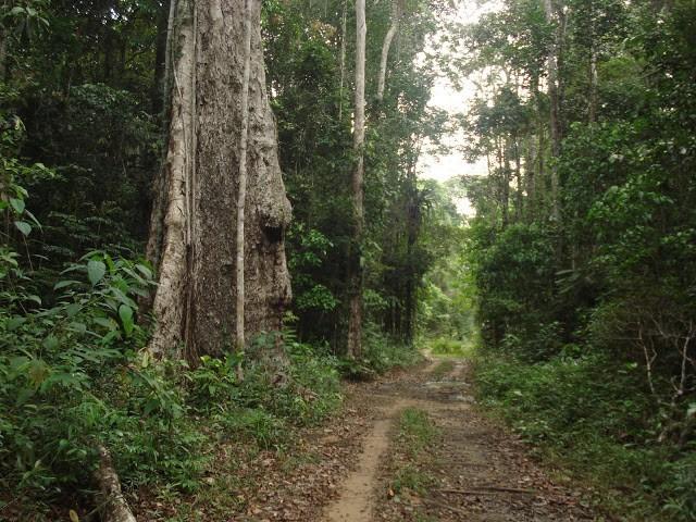 Resultado de imagem para Reserva Parque Pau Brasil, Porto Seguro