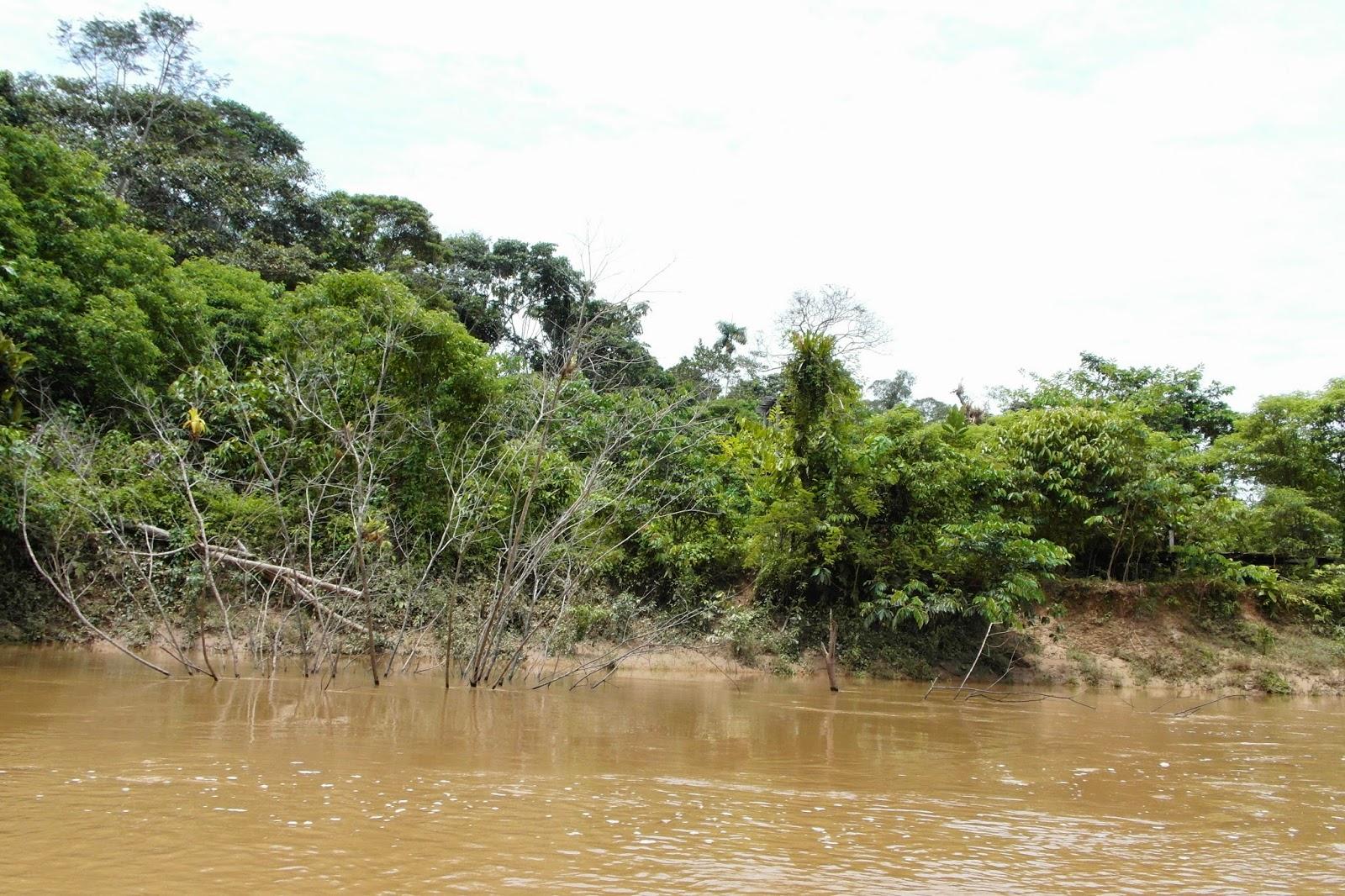 Resultado de imagen para rio curaray