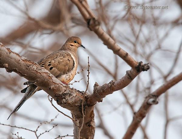 Meadow Muffin Gardens: Help The Homebound Become Bird