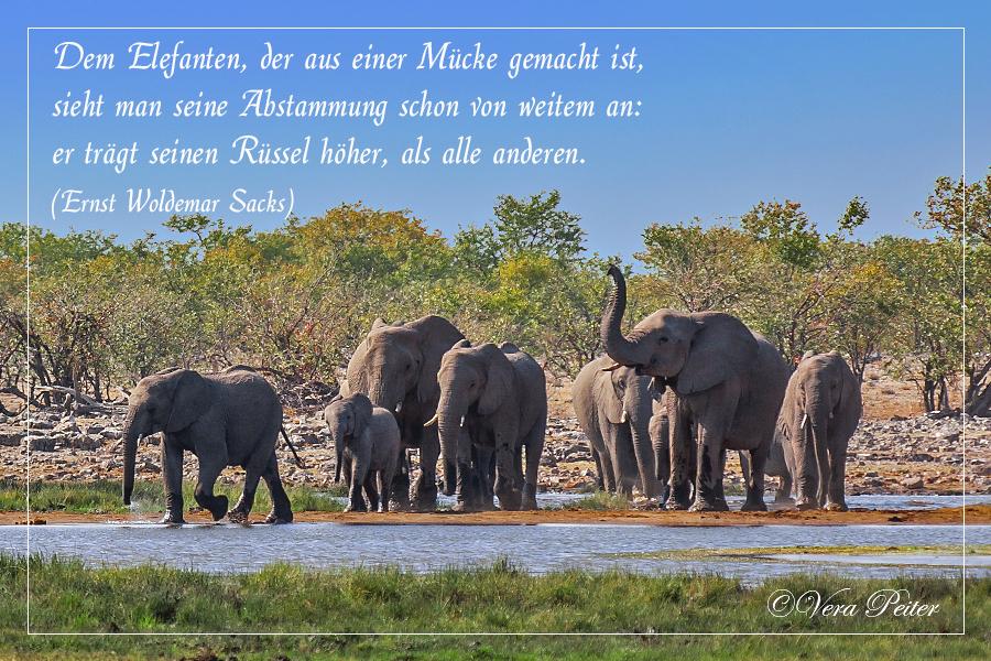 Spruch Elefant GlГјck