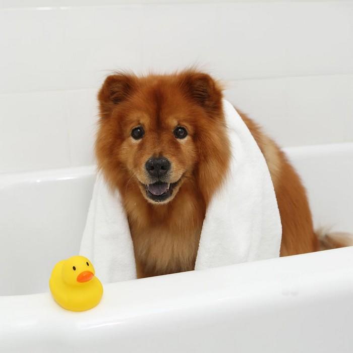 Accessoires de bain pour chiens