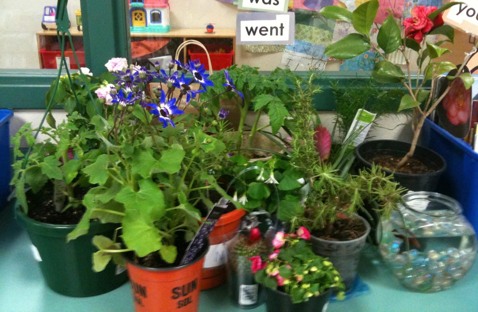 Kindergarten Superkids Plants Amp Freebies