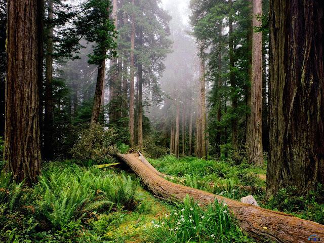 Resultado de imagen para imagen de bosques templados