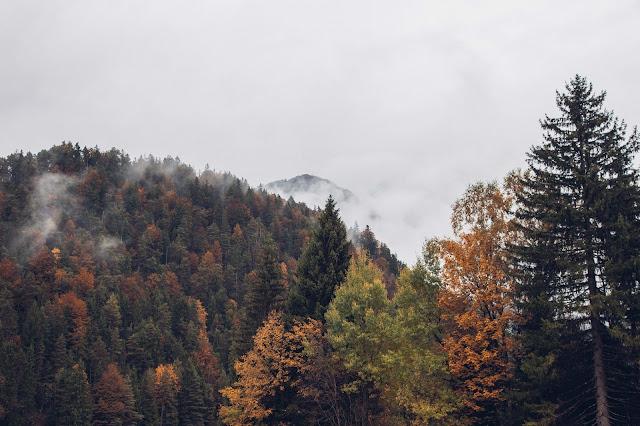 Hintersteiner-See-Rundweg  Wanderung Scheffau  Wilder Kaiser  Wandern Kitzbüheler alpen Tirol  Leichte Tour in traumhafter Kulisse 07