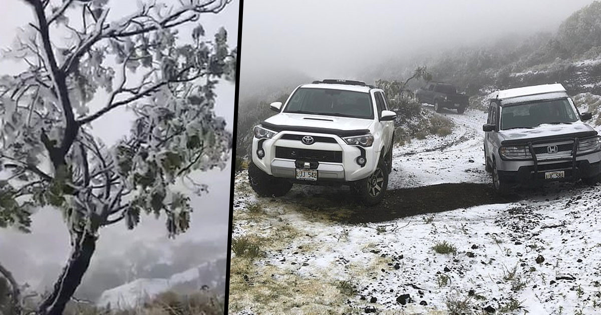 Snow Has Fallen In Hawaii State Park, Possibly For The First Time Ever