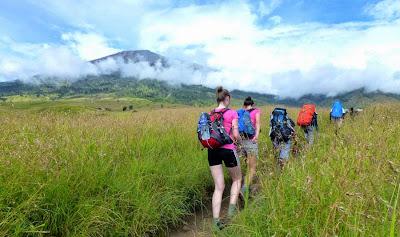 Savanna grass Sembalun Lawang altitude 1300m of mount Rinjani