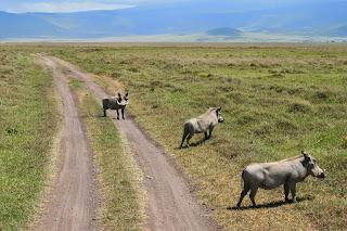 cráter de Ngorongoro, Tanzania,