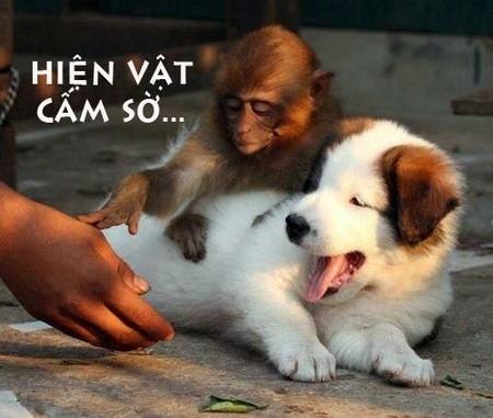 Bật cười với bộ ảnh vui về Khỉ, Vượn, Đười ươi