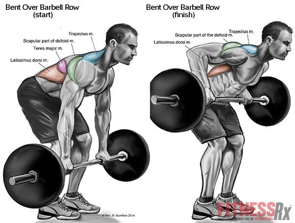 Back Exercises For Beginning Bodybuilders
