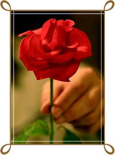 Las Flores Y Su Importancia En Nuestras Vidas Significado De Las Rosas