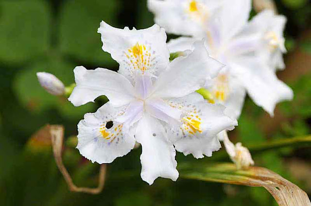 white,yellow,purple, flower, bug eaten