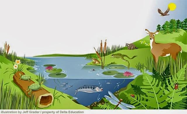 Pengertian Ekosistem dan Macam Ekosistem Beserta 2 Komponennya