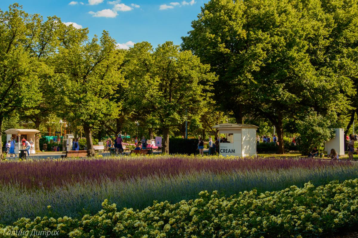 Парк Горького цветы