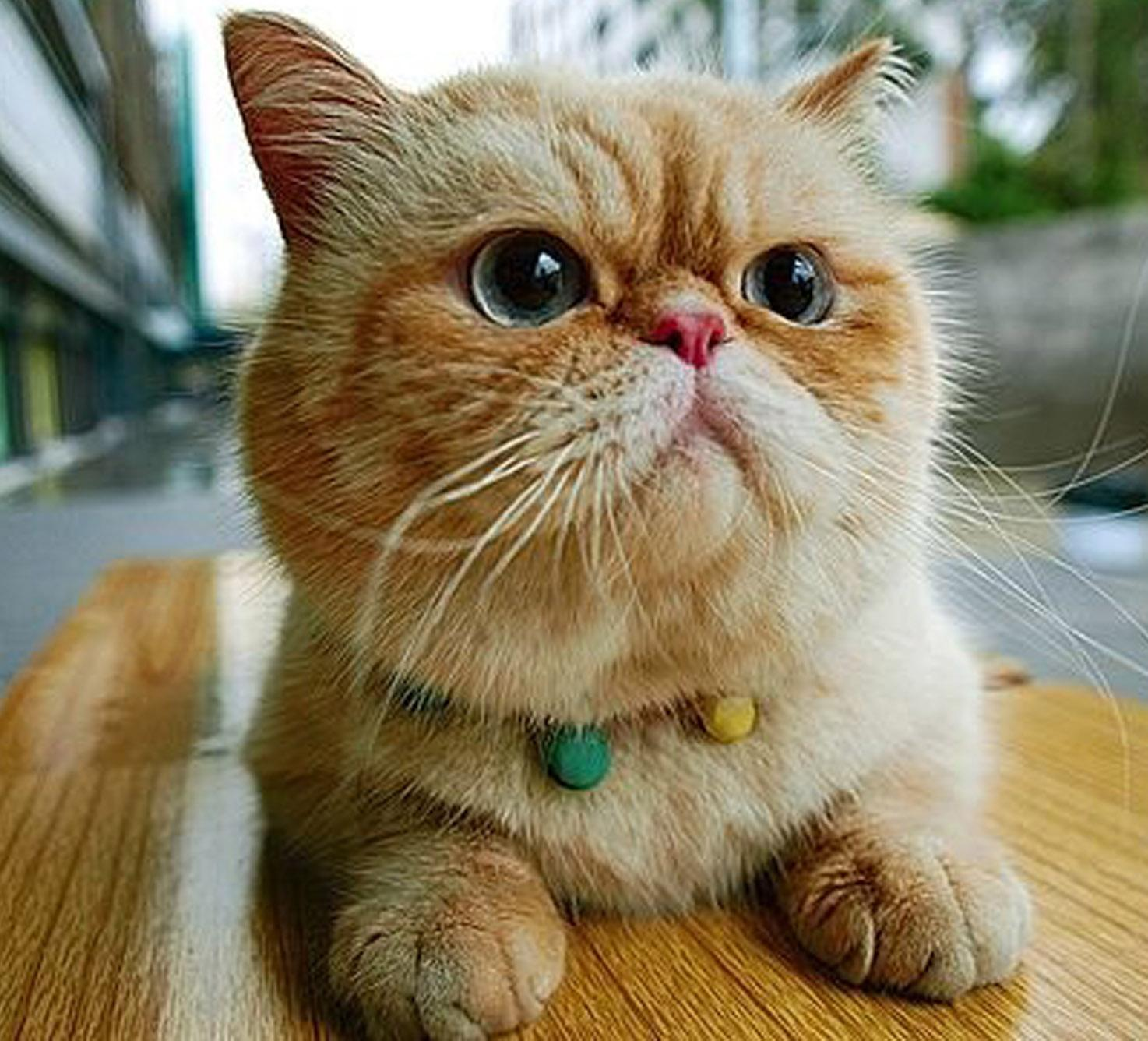Cat Pictures Information