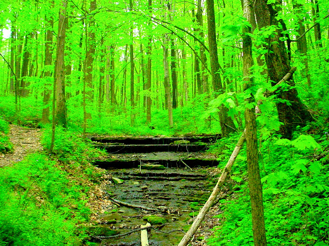 Versailles State Park Hiking Trails