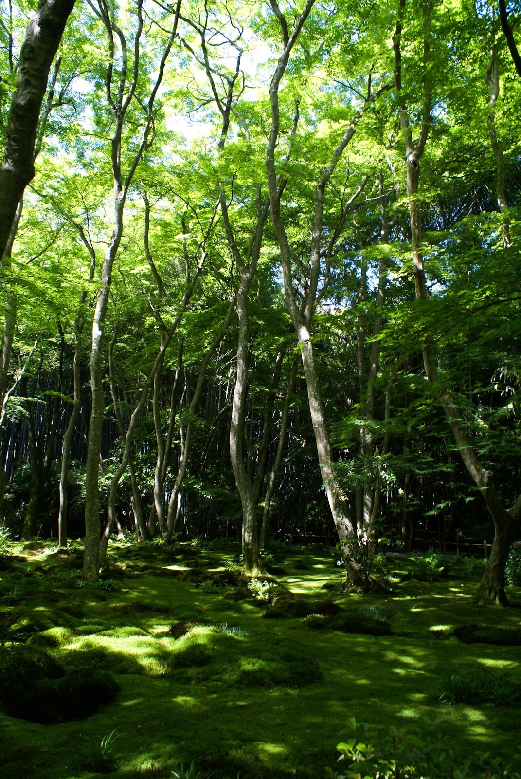 arashiyama kyoto japan gioji forest wood
