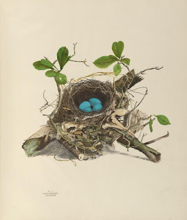Birds' nests and eggs