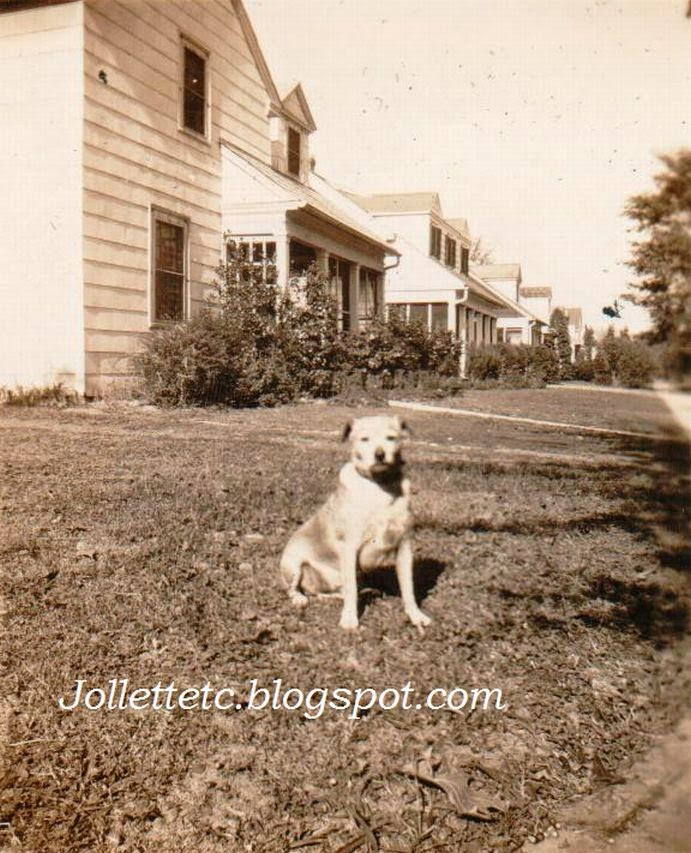 Dog on Farragut Street, Portsmouth, VA mid 1940s http://jollettetc.blogspot.com