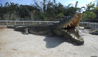 penangkaran buaya , predator fun park malang