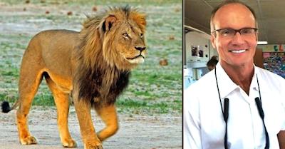το Λιοντάρι Σύμβολο της Ζιμπάμπουε, Cecil, Walter Palmer