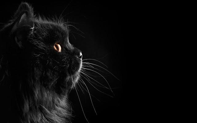 Zwarte achtergrond met een zwarte kat