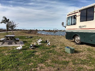 motorhome in a lakeside campsite with several ducks