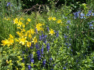 Blue and yellow flowers Hidcote Inspiring ideas Green Fingered Blog