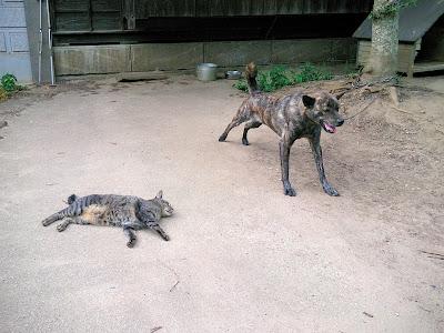 コケモモ(犬)とマメ(猫)