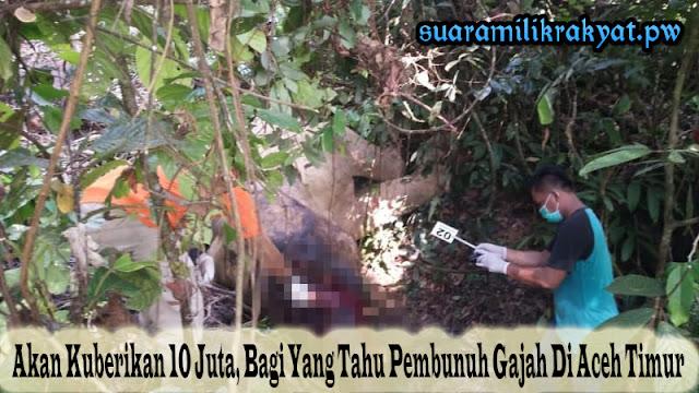 Akan Kuberikan 10 Juta, Bagi Yang Tahu Pembunuh Gajah Di Aceh Timur