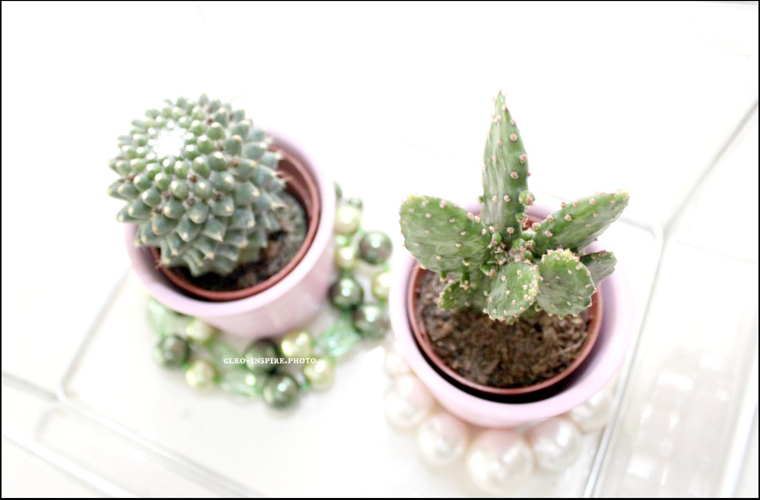 kaktus w szklanym pojemniku