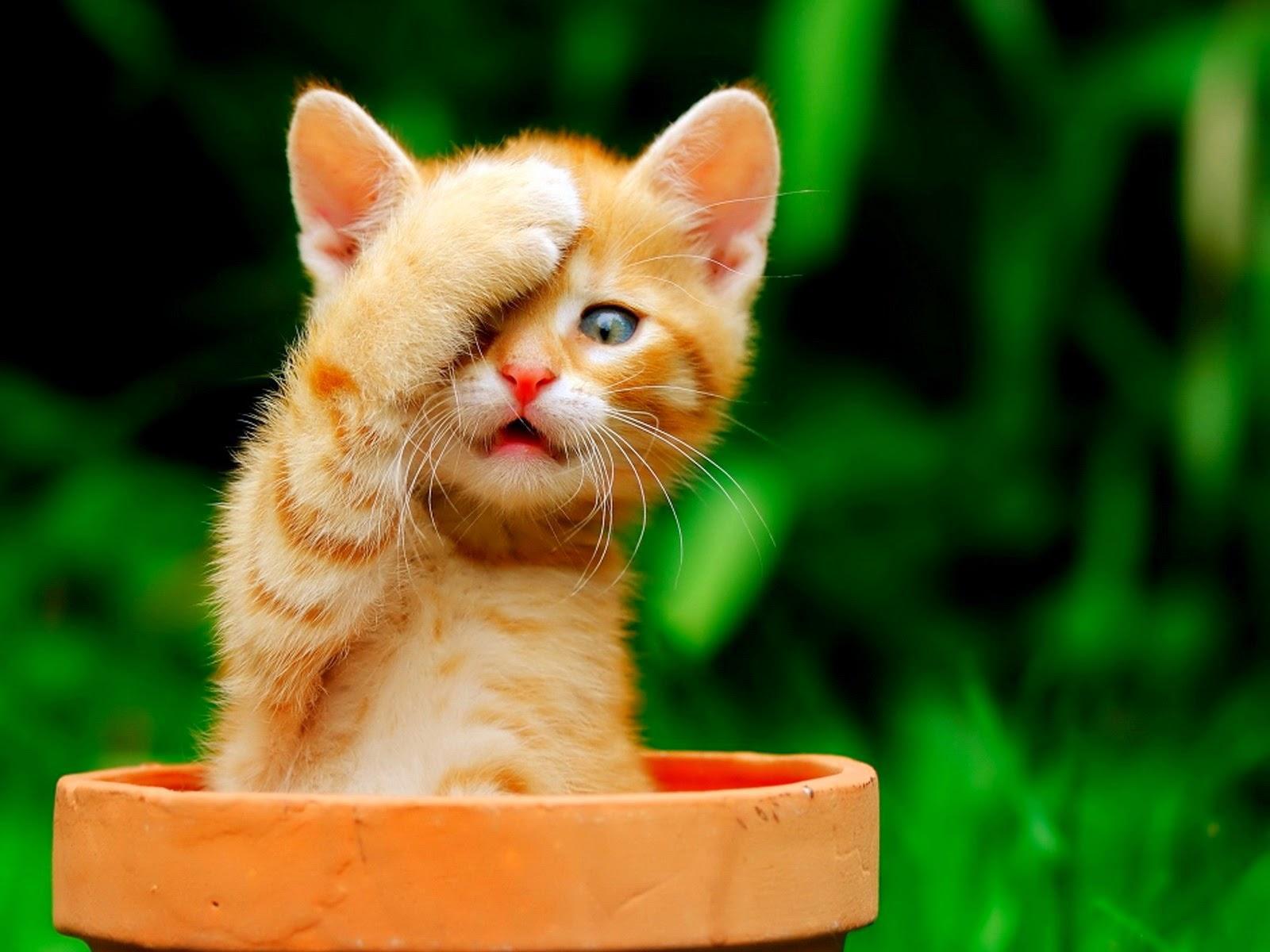 女子高生の脚ってイイよねぇぇぇ 80脚目 [無断転載禁止]©bbspink.comYouTube動画>1本 ->画像>5069枚
