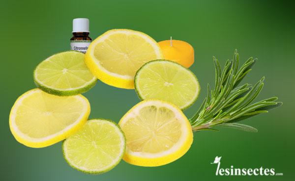 une recette naturelle efficace anti moustique