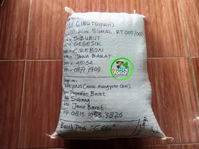 Benih Padi Pesanan  FELI Cirebon, Jabar.  Benih Sesudah di Packing