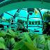 Любопитно: Има подводна зеленчукова градина покрай бреговете на Италия