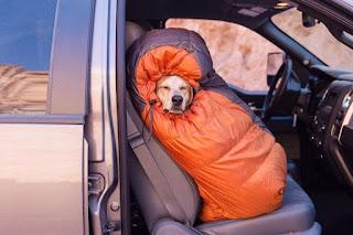 Cães no inverno