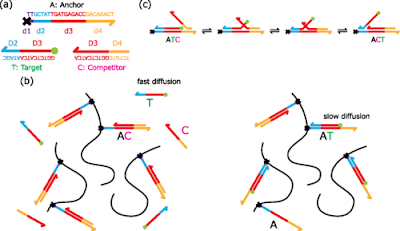 Towards Quantitative DNA Reaction-Diffusion Chemical Networks