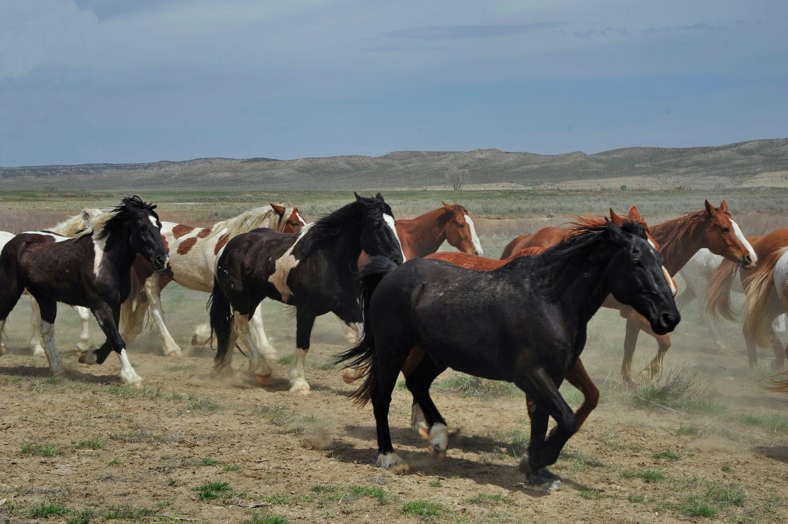 Western Fine Art Photography