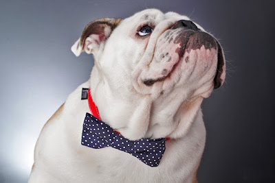 Charlie Be Good products are unique, trendy and handmade gifts for pets. #pets #dogfashion