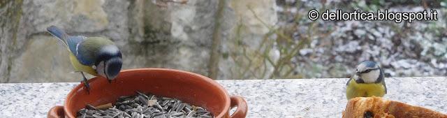 flora spontanea dittamo fauna selvatica birdwatching confetture di rosa gelatina di tarassaco lavanda piccoli frutti sali aromatizzati ghirlande oleoliti nell'appennino Bolognese e Modenese