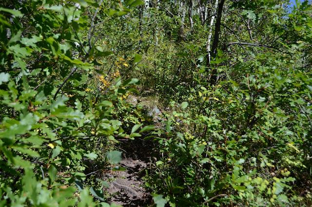 trod dirt among oak leaves