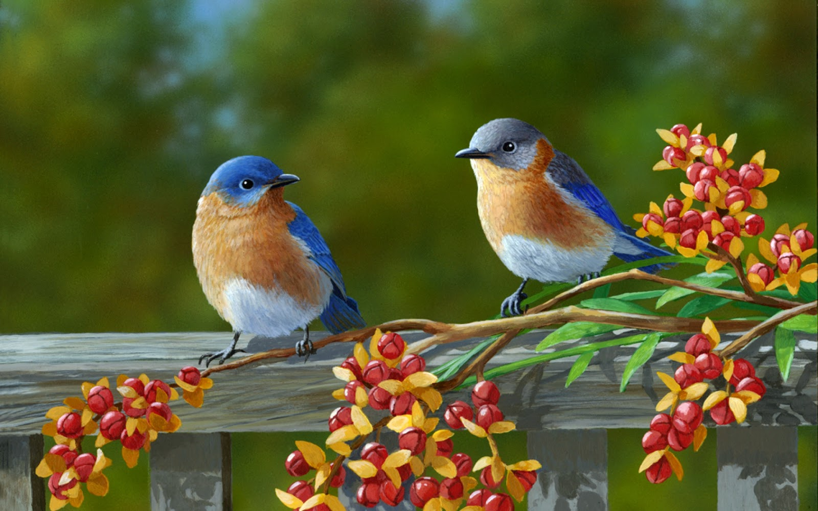 Wow Download Colorful Birds Hd Wallpaper