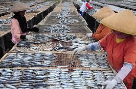 pusat industri pembuatan ikan asin di phpt pengasinan pluit