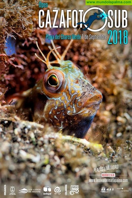 El Festival del Mar celebra este sábado la tercera edición del concurso de fotografía submarina 'Open Cazafotosub'