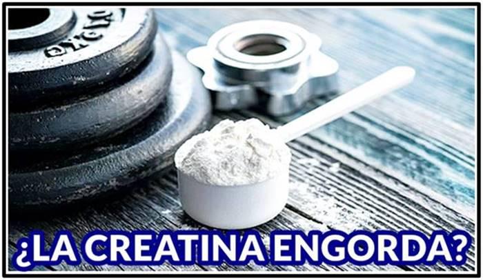 Tomar creatina no te hace engordar ni acumular grasa corporal porque no aporta calorías