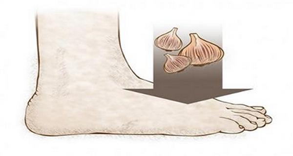 usturoiul este foarte apreciat in medicina naturista pentru proprietatile sale vindecatoare