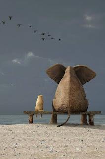 """Foto. Em dia nublado, em frente ao mar calmo, de costas e sentados em um banco sobre a areia da praia, à esquerda, um cão, e à direita, um elefante; ambos com tonalidade similar à cor da areia. O cão tem orelhas pequenas e corpo proporcional ao tamanho, as patinhas traseiras pendem no ar, sem alcançar o chão, o rabo está pousado no banco; o elefante tem orelhões em abano, corpo compacto bem maior em proporção a cabeça, as patas traseiras apoiadas na areia, e a cauda fina sobre a areia. No céu acinzentado, uma revoada de dez pássaros negros rumam à direita. No topo lê-se: """"Os melhores professores são aqueles que te mostram para onde olhar, mas não dizem o que você deve ver."""" Alexandra K.Trenfor"""